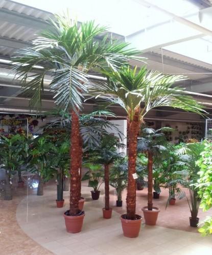 palmynowe